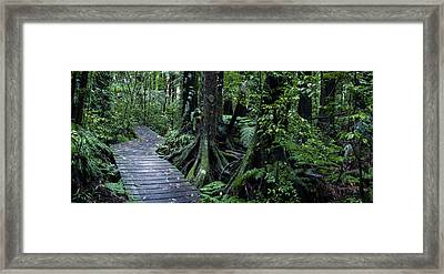 Framed Print featuring the photograph Forest Boardwalk by Les Cunliffe