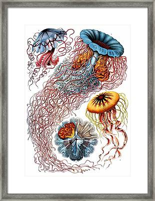 1904 Jellyfish Art Forms Of Nature Print Framed Print