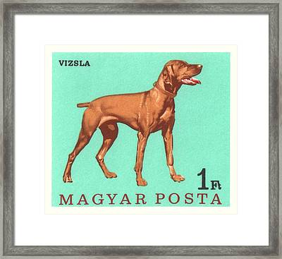 1967 Hungary Vizsla Dog Postage Stamp Framed Print