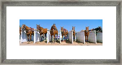 1998 World Polo Championship, Horses Framed Print by Panoramic Images