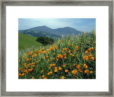 1a6493 Mt. Diablo And Poppies Framed Print