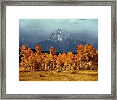 1m9235 Mt. Moran In Autumn Framed Print