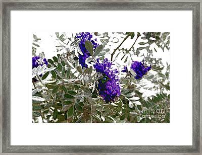 1st Blooms Of Spring-3 Framed Print by Linda Parker