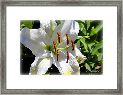 1st Lilly Framed Print by Kip Krause