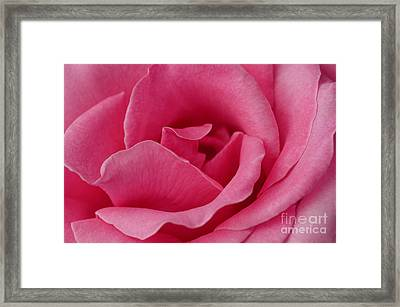 A Rose For You Framed Print by Nick  Boren