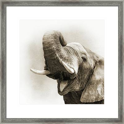 African Elephant Closeup Square Framed Print