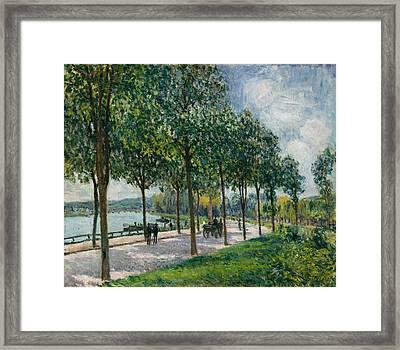 Allee Of Chestnut Trees Framed Print