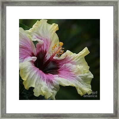 Aloha Aloalo Tropical Hibiscus Haiku Maui Hawaii Framed Print
