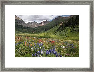 Alpine Flowers In Rustler's Gulch, Usa Framed Print