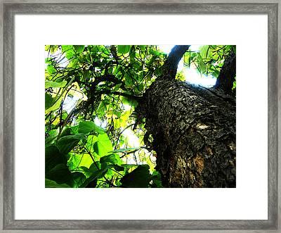 Always Looking Up Framed Print by Tim Tanis