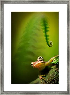 Amazon Tree Frog Framed Print by Dirk Ercken