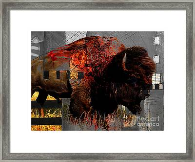 American Buffalo Collection Framed Print by Marvin Blaine