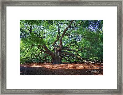 Angel Oak 2 Framed Print