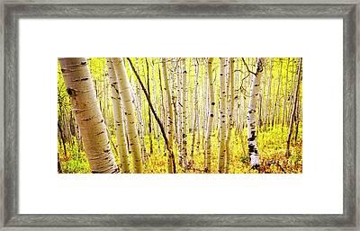 Aspen Grove II Framed Print