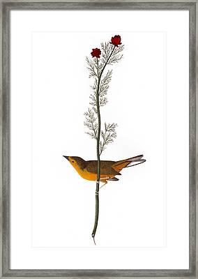 Audubon: Warbler, (1827) Framed Print by Granger