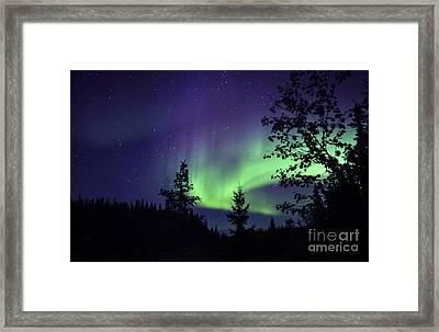 Aurora Borealis Above The Trees Framed Print by Jiri Hermann