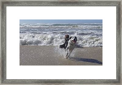 Australia - Border Collie Runs Out Of The Surf Framed Print by Jeffrey Shaw
