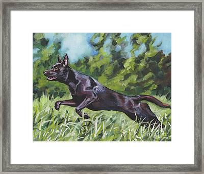 Australian Kelpie Framed Print by Lee Ann Shepard