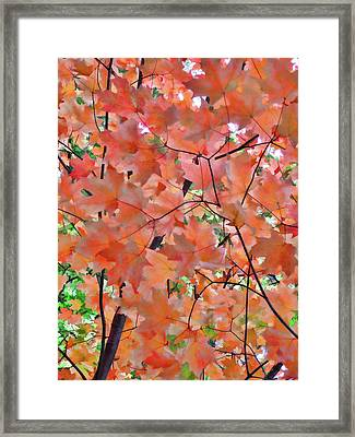 Autumn Foliage 1 Framed Print