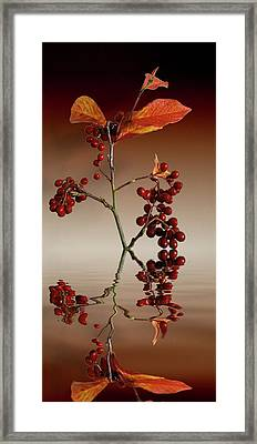 Framed Print featuring the photograph Autumn Leafs And Red Berries by David French