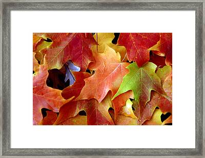 Autumn Leaves Framed Print by Dmitriy Margolin