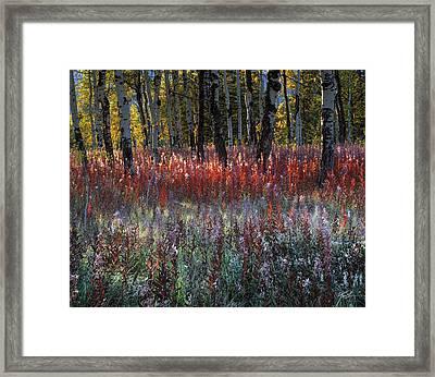 Autumn Light Framed Print by Leland D Howard