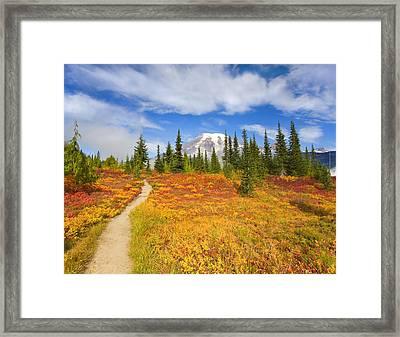 Autumn Trail Framed Print by Mike  Dawson