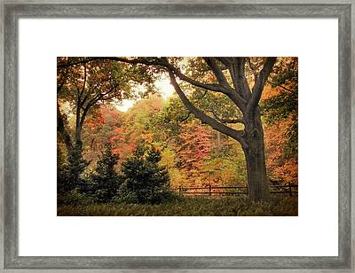 Autumn Woodland Framed Print