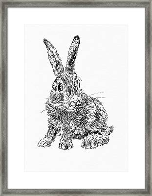 Little Rabbit Framed Print by Masha Batkova
