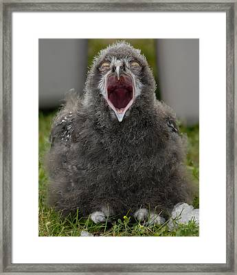 Framed Print featuring the photograph Baby Snowy Owl by JT Lewis