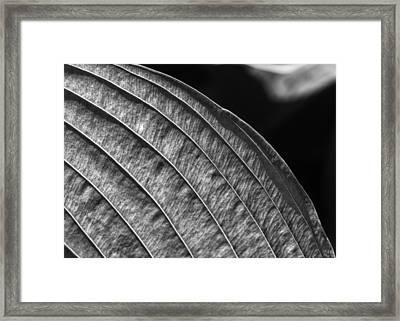 Back Lit Leaf Framed Print by Robert Ullmann