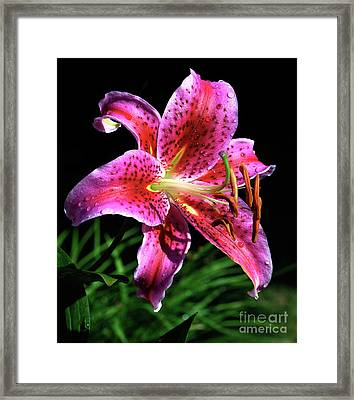 Beaming Framed Print