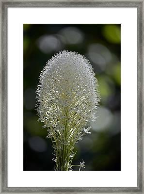 Bear Grass Framed Print