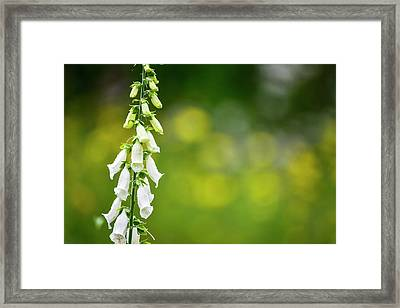 Beautiful Summer Garden Landscape With Beautiful Foxgloves In Fo Framed Print by Matthew Gibson