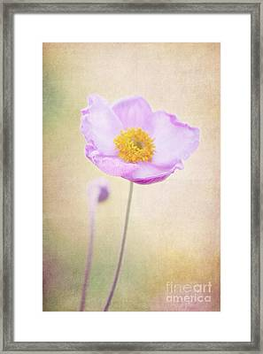 Beauty Framed Print by Angela Doelling AD DESIGN Photo and PhotoArt