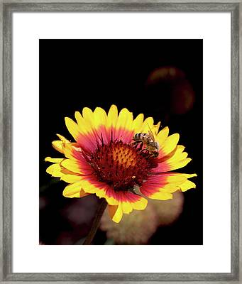 Bee On Flower Framed Print by Michael Riley