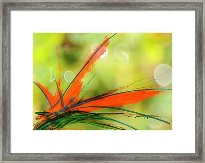 Bird Of Paradise 2 Framed Print