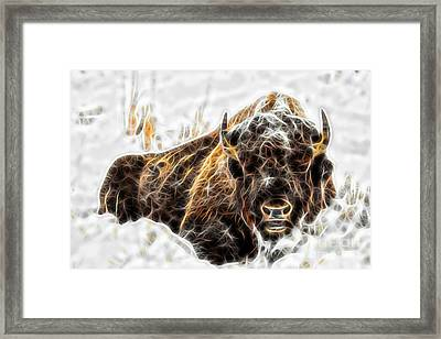 Bison Collection Framed Print
