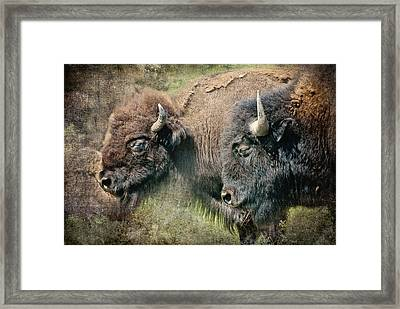 Bisons Framed Print by Iris Greenwell