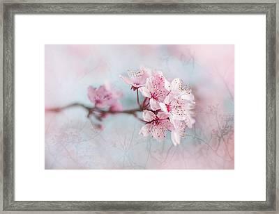 Black Cherry Plum Blossom Framed Print