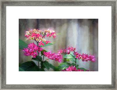 Bleeding Heart Flowers Clerodendrum Painted  Framed Print