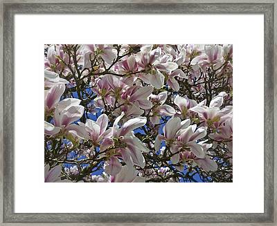 Blossom Magnolia White Spring Flowers Photography Framed Print by Artecco Fine Art Photography
