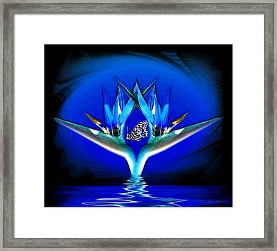 Blue Bird Of Paradise Framed Print by Joyce Dickens