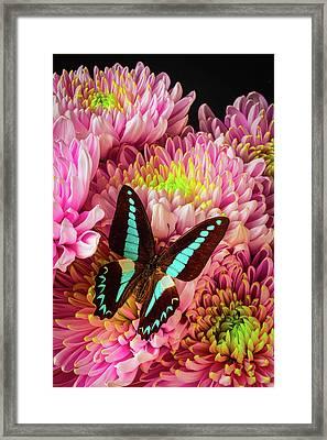 Blue Black Butterfly Framed Print