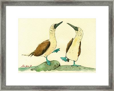 Blue Footed Boobies Framed Print by Juan  Bosco