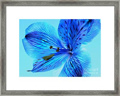 Blue Summer II Framed Print by Krissy Katsimbras