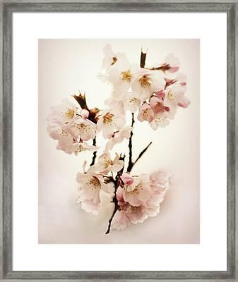 Blush Blossom Framed Print by Jessica Jenney