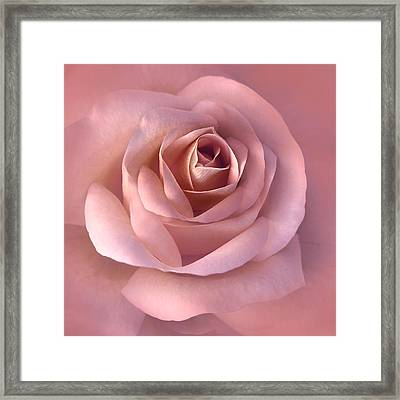 Blushing Pink Rose Flower Framed Print by Jennie Marie Schell