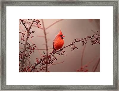 Bold Beauty Framed Print