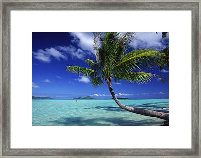 Bora Bora, Palm Tree Framed Print by Ron Dahlquist - Printscapes